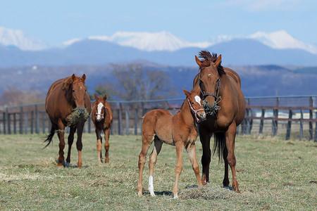 競走馬の出産がピーク